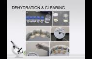 Dehidrasi dan Clearing