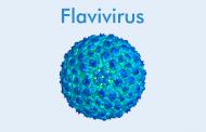 Flavivirus (Golongan B Arbovirus)